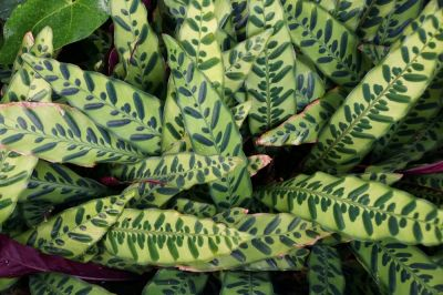 Indoor plants with fantastic foliage